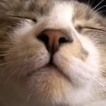 【動画あり】猫の面白カワイイすぎる動画!